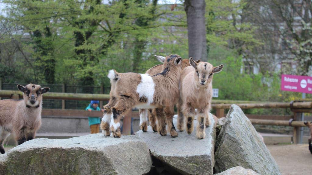Zoo In Hessen